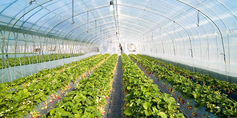 Greenhouse growers can apply for grants