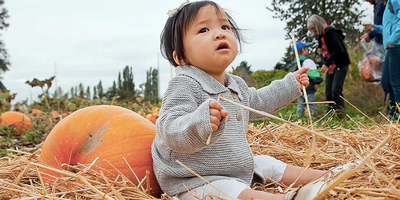 Richmond Country Farms' pumpkin patch offers fall fun